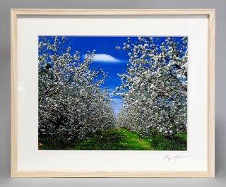 リンゴの花(0863)