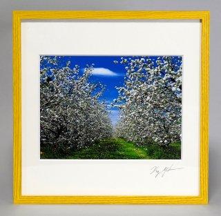 リンゴの花(0868)