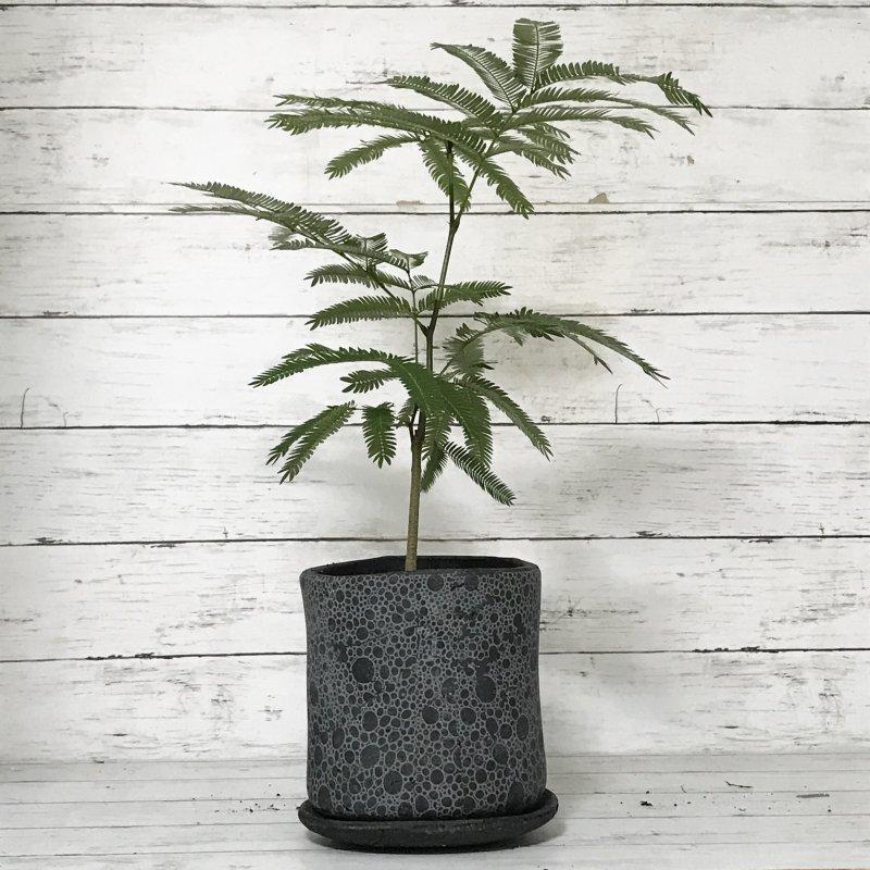 CD056-150 黒植木鉢 底穴あり・受皿あり Φ15×14�