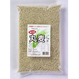 国内産 丸麦 1�
