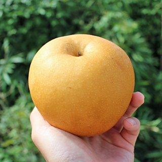 成生梨-新高5-6個入り(3kg)