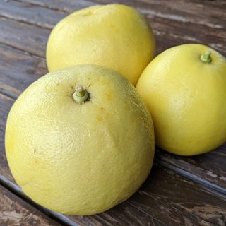 自然栽培パール柑3kg(贈答用:6-8玉前後)