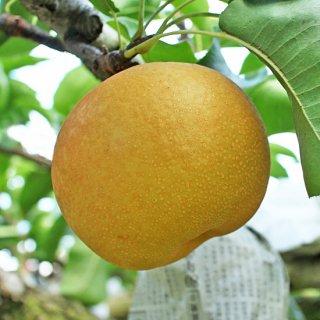 成生梨-豊水8個以上入り(3kg)