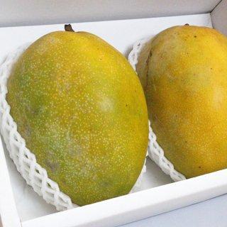 沖縄無農薬マンゴー(キーツ2kg:2-3個)※チルド冷蔵便・送料込み