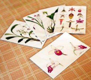 ポストカード5枚セット/ ボタニカルアート