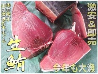 生黒マグロ、腹下3〜6kg 超贅沢!!