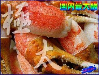ずわい蟹「親爪1kg」M〜5L 味付け・ボイル済み・リングカット