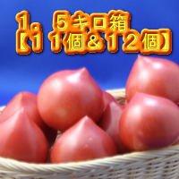 ルネッサンストマト1.5キロ箱
