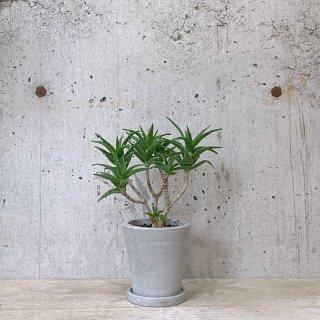 アロエ デラエティ urb pot-TYPE02-S