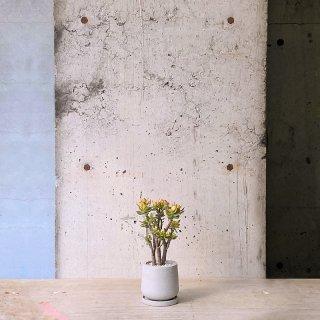 クラッスラ 姫花月 � urb pot-TYPE01-S