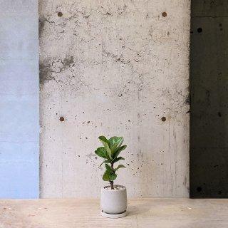 フィカス リラータ バンビーノ �  urb pot-TYPE01-S