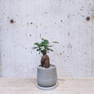 ガジュマル � urb pot-TYPE01-S