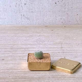 BRASS BOX サボテン 玉翁