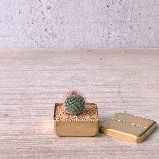 BRASS BOX サボテン  錦丸