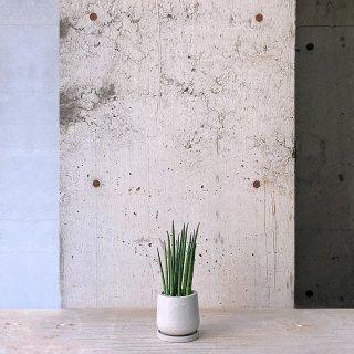 サンスベリア バキュラリス urb pot-TYPE01-S