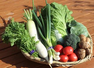 初回限定割引(旬の野菜セットM)