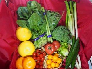 旬の野菜・果物セット(L)
