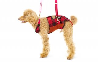 歩行補助ハーネス LaLaWalk 小型犬・ダックス用 赤チェック