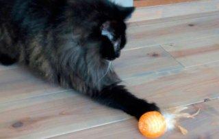 ふわふわボール羽付 猫用おもちゃ