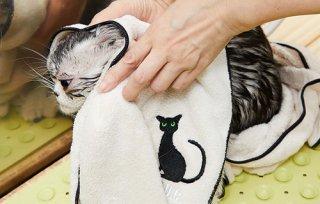 猫用 プロフェッショナル マイクロファイバータオル/ A.P.D.C.