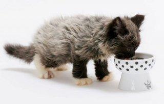 猫壱/ハッピー おやつ皿 水玉 食器