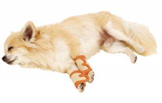 zuttone ずっとね 老犬介護用 床ずれ予防サポーター 小