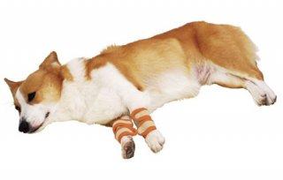 zuttone ずっとね 老犬介護用 床ずれ予防サポーター 中