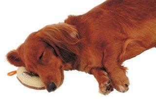 zuttone ずっとね 床ずれ予防クッション ドーナツ型 老犬介護用 小 2個入