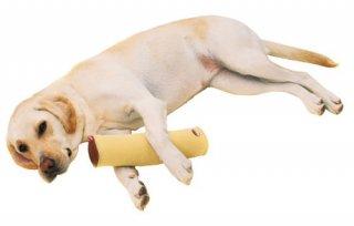 zuttone ずっとね 老犬介護用 床ずれ予防クッション スティック型 大