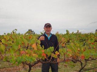 ワインへの思い 2012年3月16日レッドバンク・ワイナリーのブドウ摘み