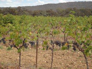 ワインへの思い 2012年3月20日レッドバンク・ワイナリーの風景