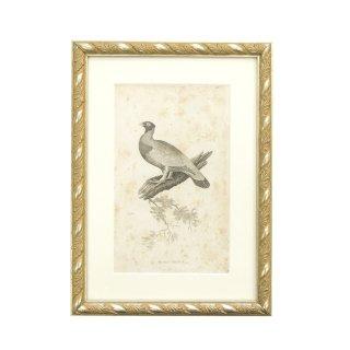 アンティーク ライチョウ 鳥 アート フレームセット