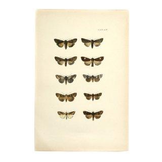 1896年 イギリス アンティーク アート 蝶 バタフライ ハンドカラープリント Plate49