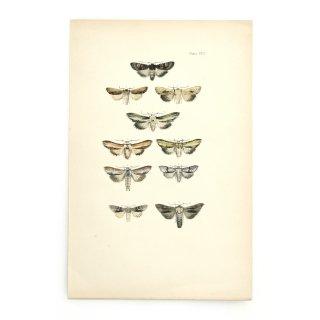 1896年 イギリス アンティーク アート 蝶 バタフライ ハンドカラープリント Plate66