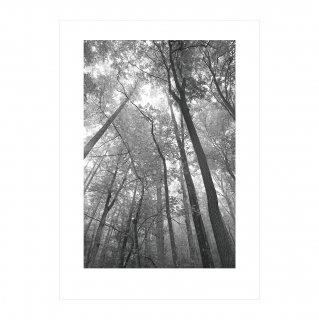 アートポスター「木漏れ日」 (020)  | GENERAL SUPPLY