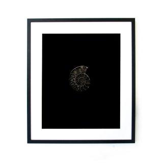 松元康明 「ammonite」 アート 写真 フレームセット