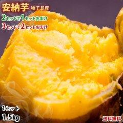 安納芋 種子島産 あんのういも 送料無料 秀品1.5kg 2セット購入で1セットおまけ 3セット購入で2セットおまけ さつまいも 芋