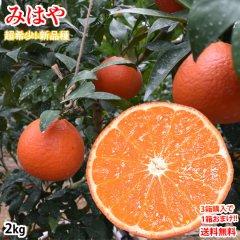 みはや みかん 送料無料 秀品 2kg 3箱購入で1箱おまけ ハウス栽培 希少品種 熊本県産 蜜柑 早生みかん ミカン