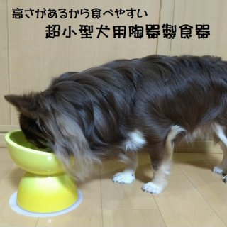 【ペット用品】陶器製 超小型犬用食器 イエロー/CHOB1_536236