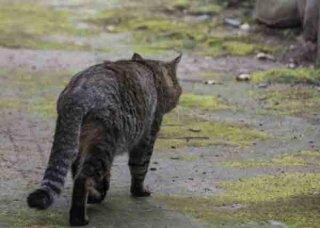 動物虐待と対人暴力の関連性(LINK)とは?