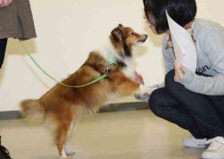 動物介在介入・インターラクション(AAI)とは?