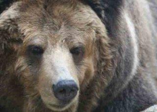 日本のクマ牧場2015 Wild Welfareの報告書 (2015年)