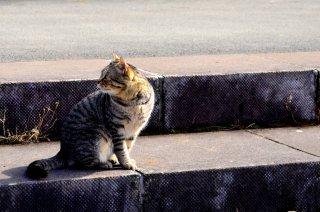 VSW情報センター 〜人の社会福祉における動物のいちづけ〜 ニュースレター Vol. 5