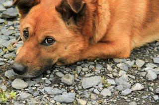 VSW情報センター 〜人の社会福祉における動物のいちづけ〜 ニュースレター Vol. 7