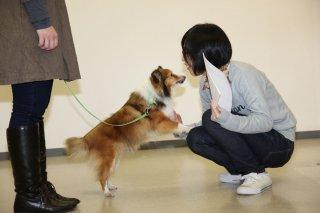 まずハンドラーから選ぶ〜動物介在プログラムに参加するボランティアの評価方法〜