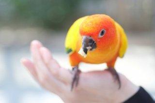 動物の施設内飼育を考える〜医療・福祉・教育施設においてペットを迎えるための指針〜