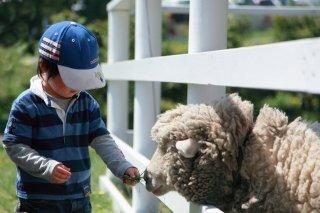動物介在教育(AAE)とは? 動物愛護教育との違い、動物が子どもに及ぼす影響