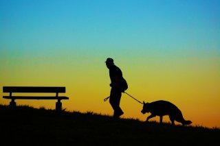 VSW情報センター 〜人の社会福祉における動物のいちづけ〜 ニュースレター Vol. 9
