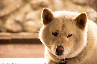 家庭内における動物虐待と対人暴力の関連性(LINK)〜動物虐待と子ども虐待の連動性について〜