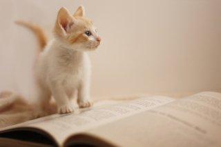 動物専門職のための英語 Vol. 3